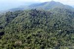 Borneo rainforest -- sabah_0768