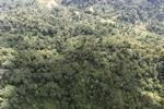 Borneo rainforest -- sabah_0769