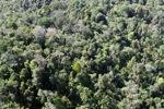 Borneo rainforest -- sabah_0770