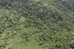 Borneo rainforest -- sabah_0771