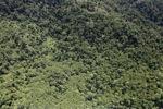 Borneo rainforest -- sabah_0772