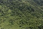 Borneo rainforest -- sabah_0773