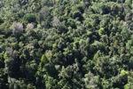 Borneo rainforest -- sabah_0774
