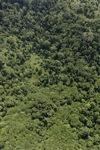 Borneo rainforest -- sabah_0775