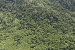 Borneo rainforest -- sabah_0776