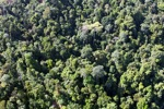 Borneo rainforest -- sabah_0779