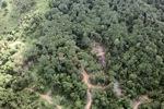 Logging road -- sabah_0781