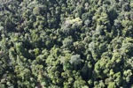 Borneo rainforest -- sabah_0782