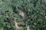 Logging road -- sabah_0783