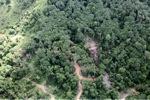 Logging road -- sabah_0784