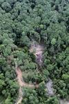 Logging road -- sabah_0786