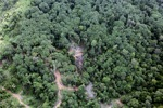 Logging road -- sabah_0787