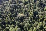 Borneo rainforest -- sabah_0789