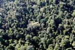 Borneo rainforest -- sabah_0790