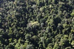Borneo rainforest -- sabah_0791