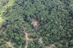 Logging road -- sabah_0792