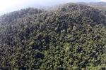 Borneo rainforest -- sabah_0793