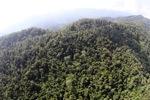 Borneo rainforest -- sabah_0794