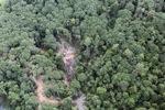 Logging road -- sabah_0795