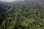Oil palm plantation -- sabah_0796