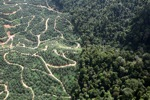 Oil palm plantation -- sabah_0798