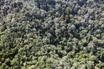 Borneo rainforest -- sabah_0802