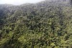 Borneo rainforest -- sabah_0803
