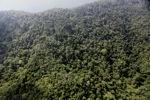 Borneo rainforest -- sabah_0805