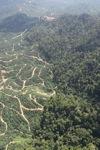 Oil palm plantation -- sabah_0806