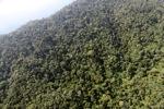 Borneo rainforest -- sabah_0807