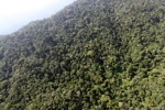 Borneo rainforest -- sabah_0808