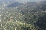 Oil palm plantation -- sabah_0809