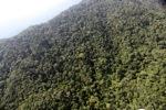 Borneo rainforest -- sabah_0810