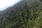 Borneo rainforest -- sabah_0811