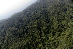 Borneo rainforest -- sabah_0814
