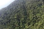 Borneo rainforest -- sabah_0815