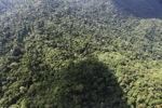 Borneo rainforest -- sabah_0816