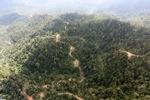 Logged forest -- sabah_0817