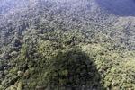Borneo rainforest -- sabah_0818
