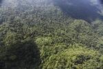 Borneo rainforest -- sabah_0820