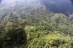 Borneo rainforest -- sabah_0823