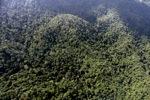 Borneo rainforest -- sabah_0825