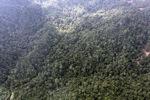 Logged forest -- sabah_0826