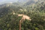Logged forest -- sabah_0832