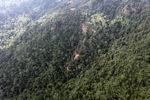 Logging road -- sabah_0833