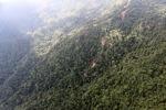 Logging road -- sabah_0834