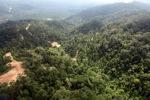 Logged forest -- sabah_0835