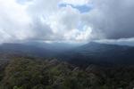 Borneo rainforest -- sabah_0838