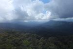 Borneo rainforest -- sabah_0840