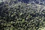 Borneo rainforest -- sabah_0841